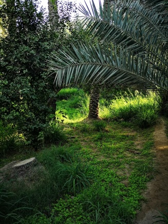 In the Al Ain Oasis